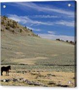 White Mountain Horse Acrylic Print