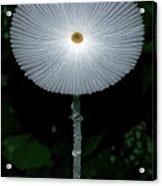 White Mushroom Acrylic Print