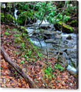 White Oak Run In Spring Acrylic Print