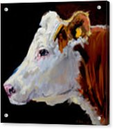White On Brown Cow Acrylic Print