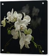 White Orchid And Reflection Acrylic Print