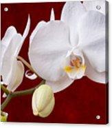 White Orchid Closeup Acrylic Print