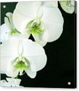 White Orchid Elegance Acrylic Print