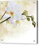 White Orchid Flower Acrylic Print by Pics For Merch