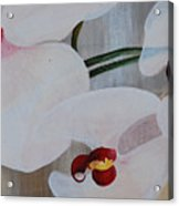 White Orchid Light Background Middle Section Acrylic Print