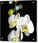 White Orchid On Black Bw Acrylic Print