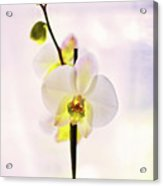 White Orchid V2 Acrylic Print
