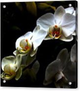 White Orchid With Dark Background Acrylic Print by Jasna Buncic