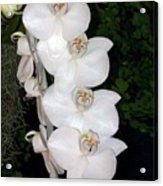 White Orchids California Acrylic Print