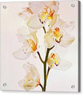 White Orchids Faux Watercolor Acrylic Print
