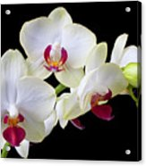 White Orchids Acrylic Print by Garry Gay