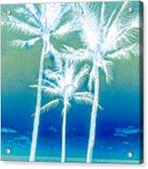 White Palms Acrylic Print