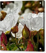 White Paper Petals Acrylic Print