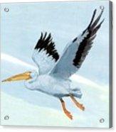 White Pelican 1 Roger Bansemer Acrylic Print
