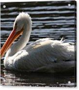 White Pelican . Ripple Waters Acrylic Print