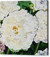 White Peony Garden Acrylic Print