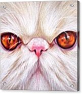 White Persian Cat Acrylic Print