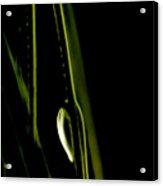 White Pine Dew Acrylic Print