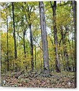 White Pine Hollow Acrylic Print