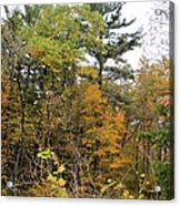 White Pine Hollow State Forest Acrylic Print