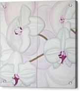 White Pink Orchide Acrylic Print