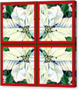 White Poinsettia Quartet Acrylic Print