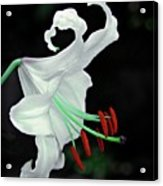White, Red And Green Lily Acrylic Print