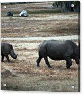 White Rhino's Acrylic Print
