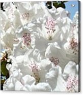 White Rhododendrons Flowers Art Prints Baslee Troutman Acrylic Print