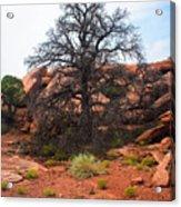 White Rim Overlook Trail Tree Acrylic Print