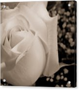White Rose Bw Fine Art Photography Print Acrylic Print