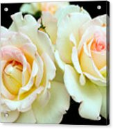 White Rose Cluster Acrylic Print