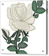 White Rose On A Winter Day Acrylic Print