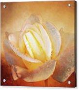 White Rose On Deep Texture Acrylic Print