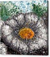 White Saguaro Cactus Blossom Acrylic Print
