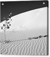 White Sands 4 Acrylic Print