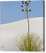 White Sands National Monument, Nm Acrylic Print
