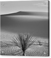 White Sands Yucca Acrylic Print