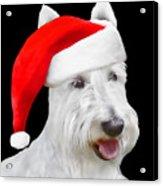 White Scottish Terrier Dog Christmas Card Acrylic Print