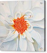 White Smile Acrylic Print