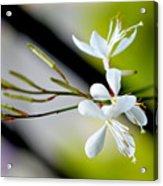 White Stem Flowers Acrylic Print
