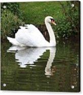 White Swan In Belgium Park Acrylic Print