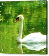 White Swan Swim In Pond Acrylic Print