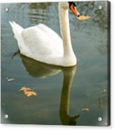 White Swan With Reflection Acrylic Print