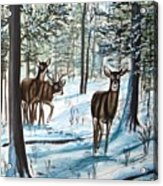 White Tail Deer In Winter Acrylic Print