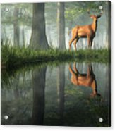 White Tailed Deer Reflected Acrylic Print