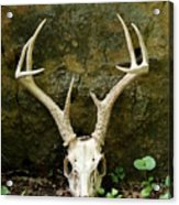 White-tailed Deer Skull In The Woods Acrylic Print