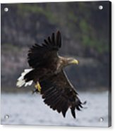 White-tailed Eagle Against Cliffs Acrylic Print