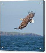 White-tailed Eagle Over The Sea Acrylic Print