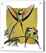 White Throated Bee Eater Pf Acrylic Print